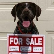 vendita cani