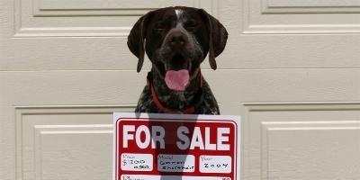 Vendita Cuccioli Cani Il Cane