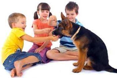 pastore tedesco e bambini