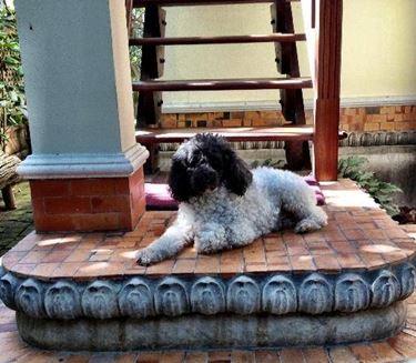 casa cane