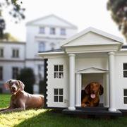 La casa per cani