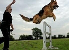 Corso per cani