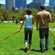 Dog-sitter: una figura professionale ed estremamente ricercata