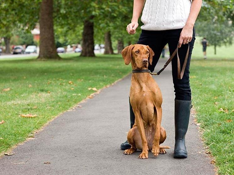 Trovare un buon dogsitter non è così semplice come si possa immaginare