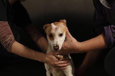 cane affidato a estranei