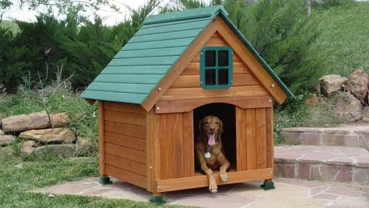 cane felice in cuccia