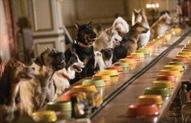 hotel cani