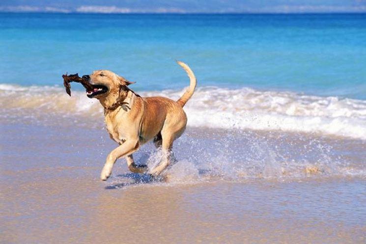 Cane che corre sul bagnasciuga