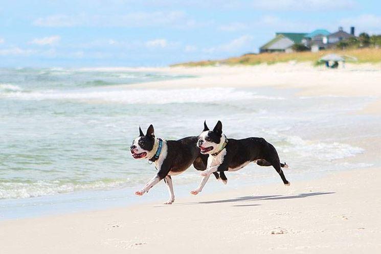 Coppia di cani in spiaggia