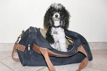 vacanze con i cani
