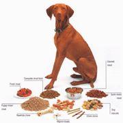 foto cibo cani