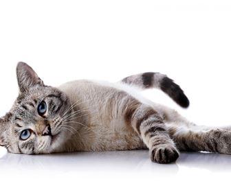 domande e risposte gatti