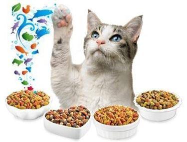 alimentazione gatti