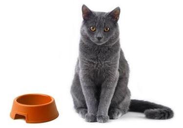 cibo gatti