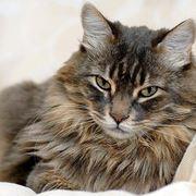 gatti sterili
