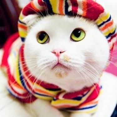 integratori gatti