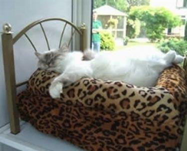 alberghi per gatti