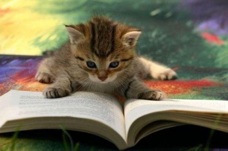 comportamento gatti