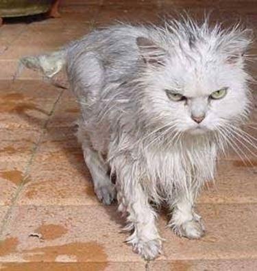 stress gatto