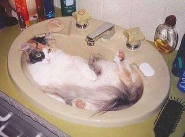 lavare gatto