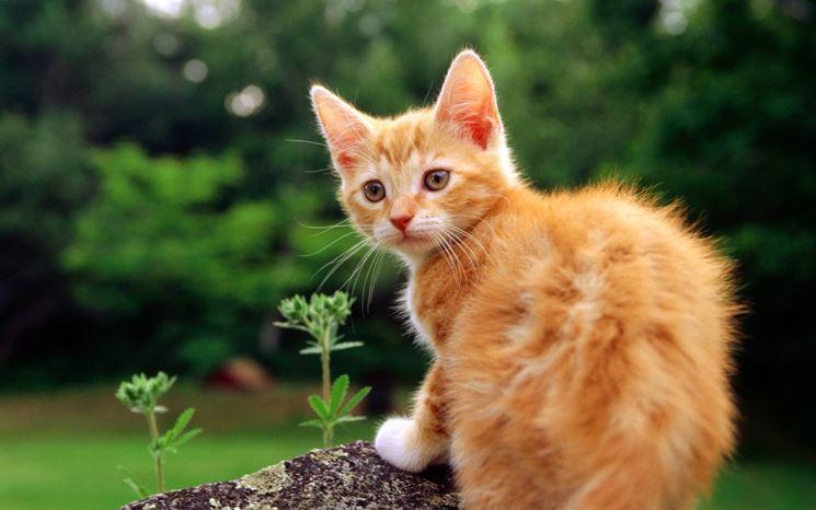 gatti cura