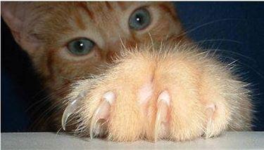 Come tagliare le unghie al gatto