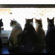 Gatti Cattivi Odori Da Appartamento Adiacente Domande E Risposte