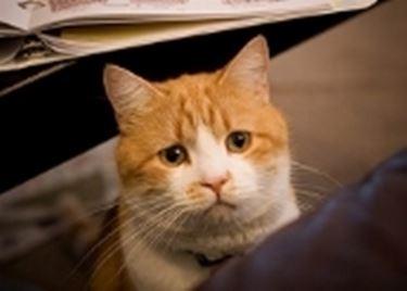 gatto con diarrea