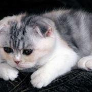 gatto ammalato