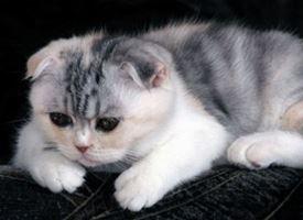 Gattino con problemi respiratori