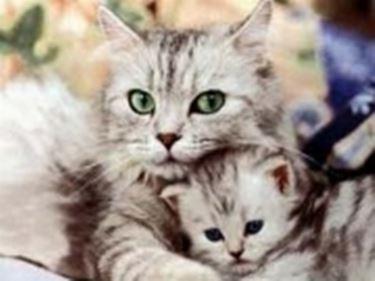 malattie gatto