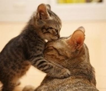 gatto con mamma