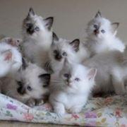 Una splendida cucciolata di gatti