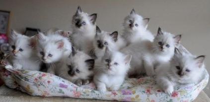 Adozione Gatti Il Gatto
