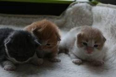 cuccioli di micio