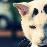 cistite gatto