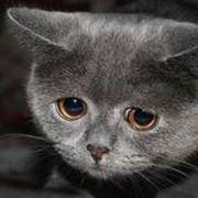 diarrea gatto
