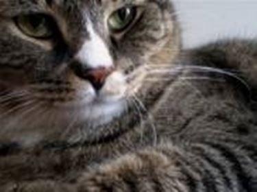gatto adulto 2