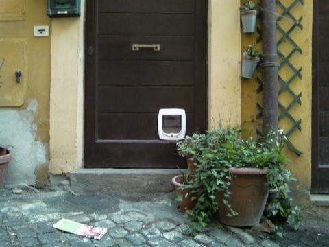 Gattaiola il gatto for Porta basculante per cani fai da te