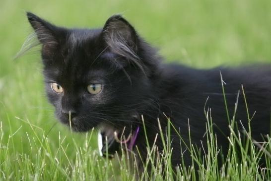 Quello che striscia i gattini possono avere