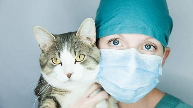 dal veterinario