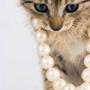 gatto luxe