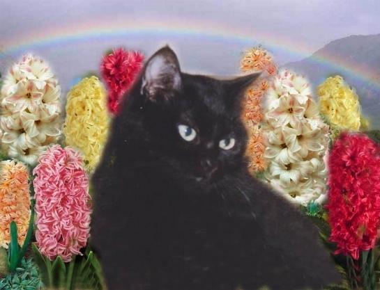 Raffreddore gatto il gatto come riconoscere il for Gatto che starnutisce