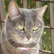 sterilizzazione gatta convalescenza