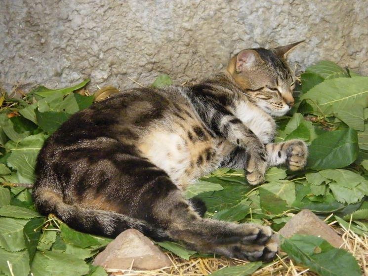 Sterilizzazione Gatto Il Gatto