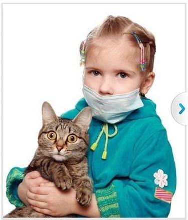 allergie gatti