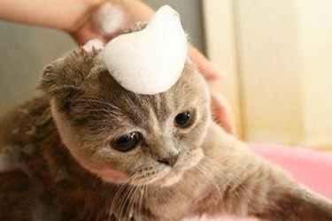 antipulci gatti