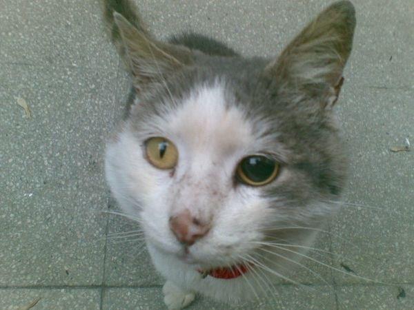 FeLV - Malattie Gatti - FeLV, ovvero la leucemia felina