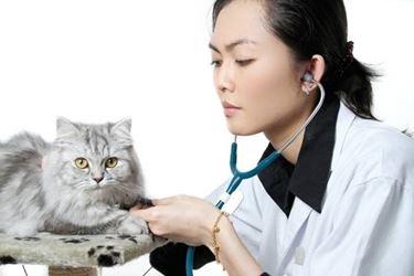 Ricorrere all'aiuto del veterinario è di fondamentale importanza