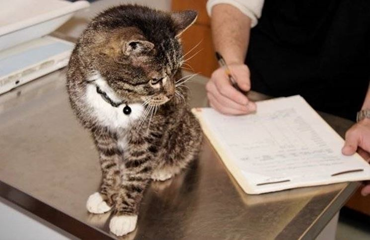 Controlli periodici dal veterinario possono risultare efficaci nella prevenzione della FIP gatto